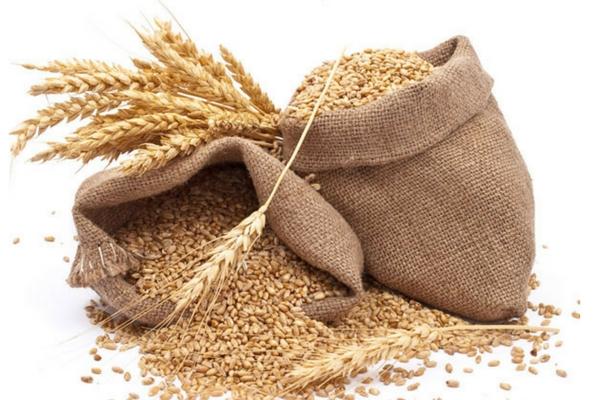 Wheat Grains - Farmers Fresh